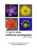 Free eBook: 13 Tips for Better Wildflower Photography