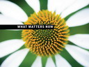 Free eBook: What Matters Now